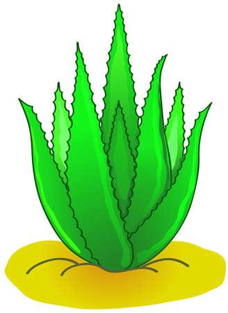 Aloe Vera. Stock Vector - 13963476