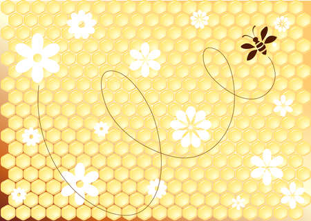 honeycomb and bee Vector
