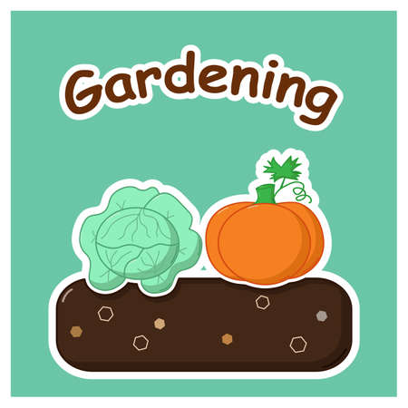 terra: Garden bed with mature cabbage and pumpkin