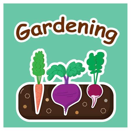 Garten-Bett mit Karotten Rüben und Radieschen Vektorgrafik