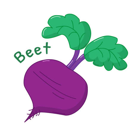 beet: Isolated icon of raw beet with name Illustration