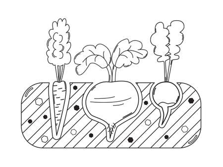 terra: Thin line gardening bed with carrot beet and radish