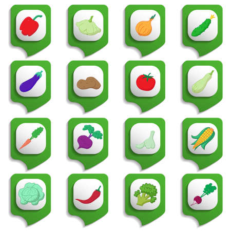 marrow: Raw vegetables icon set on green substrates Illustration