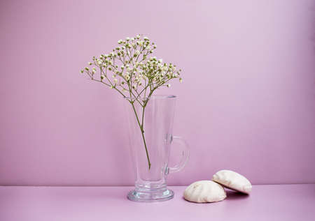 Glass Vase With White Flower And Two Zephyrs On Pink Background