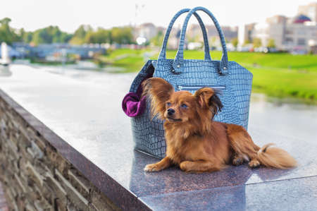 Red Russian Terrier lying near  gray dog carrying bag and looking away. Side view Banque d'images