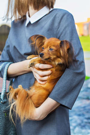 Young woman holding red Russian Terrier by hands Banque d'images