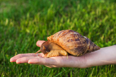 Big snail sitting on a woman's hand on a grass background