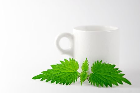 nettle leaf with tea cup background