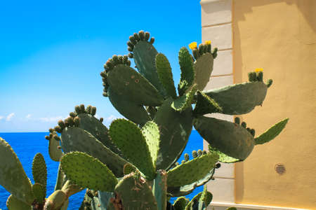 Italy summer scene with cactus, wall and blue sky, summer sun concept photo
