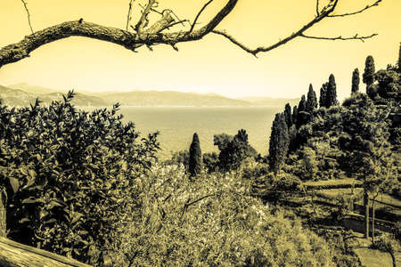 olive groves: Olive groves in Italy vintage photography.