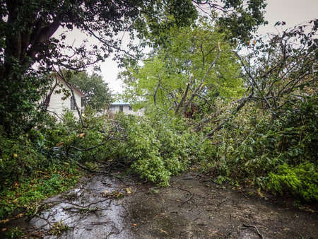 Fallen trees blocking driveway after storm in Auckland New Zealand