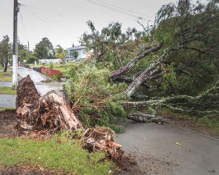 Tree uprooted in storm blocking footpath and driveways in Auckland New Zealand Stock Photo