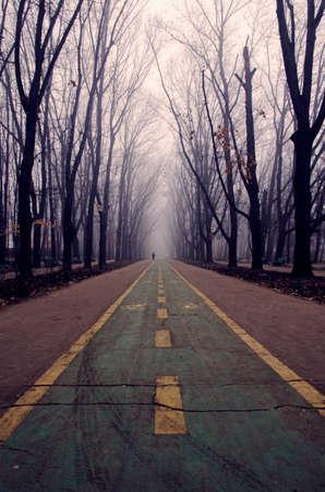 seasonic: Foggy road