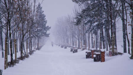 heavy snow: Heavy snow in a park in Bucharest. Editorial