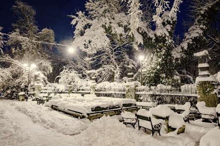 winter park: Winter night Stock Photo