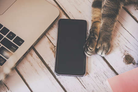 paw smart: Cat paws holding a smart phone on a wood background Stock Photo
