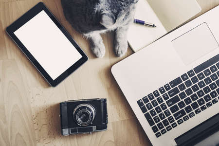 paw smart: Cat and devices - working concept with copy space Stock Photo