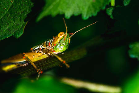 Colorfull grasshopper with antena taking resting Stock Photo