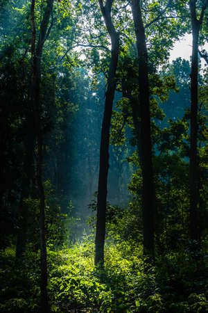 Backlight sun rays with mist appearing at Jim Corbett forest 写真素材