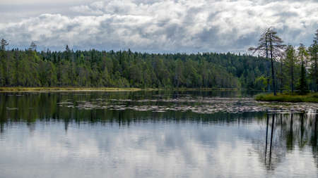 Autumn with mirrored pine forest and misty Northern lake. Fog rises above the water at dawn. Finland, Scandinavia 免版税图像
