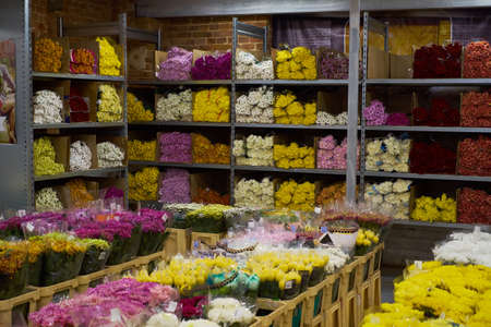 Flower market with various multicolored fresh flowers in pots. Red, pink,orange hydrangea, bellflower beautiful multilevel showcase