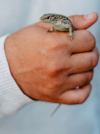 a small lizard on a man's hand close-up