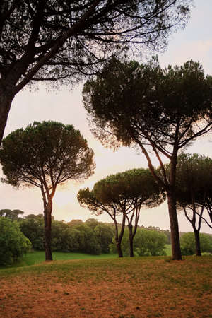 Park with pine trees of Rome cityscape