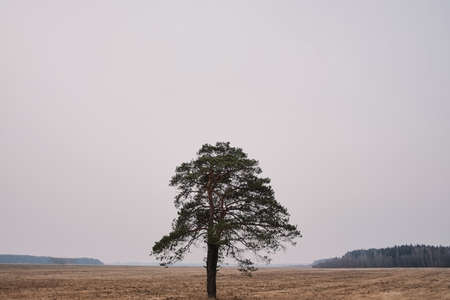 Lonely tree in the middle of a field on a cloudy autumn day