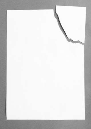 Sheet of white paper divided in two pieces, isolated on grey background, copyspace photo