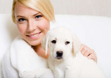 White labrador puppy sitting on the hands of woman photo