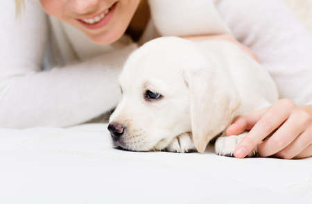 Close up of white white puppy lying on the sofa with woman in white sweater Stock Photo