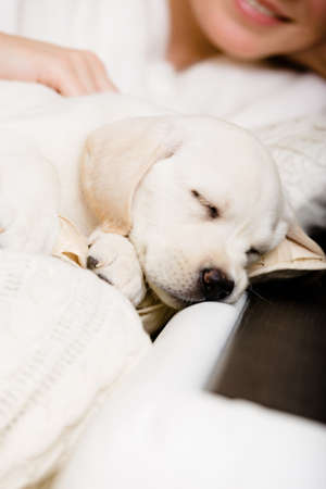 Close up of sleeping white puppy on the hands of female owner sitting on the sofa photo