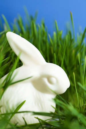 the feast of the passover: China easter bunny is in the thick green grass, isolated on blue Stock Photo