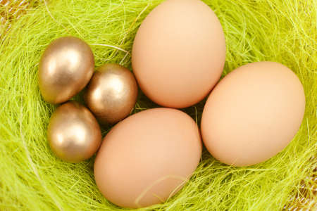 chucky: Brown and golden easter eggs are on sisal green fibre