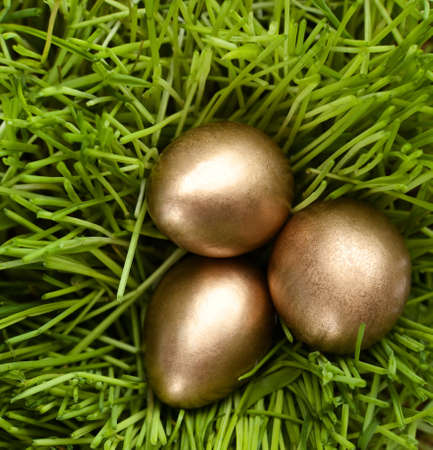 chucky: Three golden eggs are in the green grass, close up