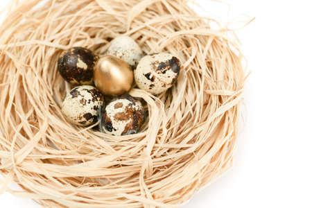 spring tide: Miraculous nest with golden and natural quail eggs, isolated on white background