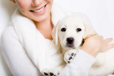 Closeup of Labrador puppy on the hands of woman in white sweater on white background Stock Photo