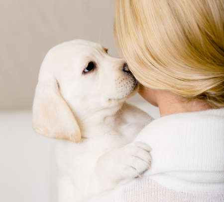 Puppy of Labrador kisses the face of woman in white sweater photo