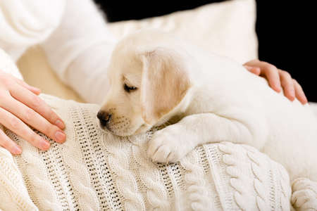 bedspread: White Labrador puppy lying on white bedspread near the hands of woman