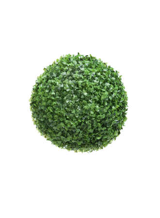 Close up of ball-shaped green bush, isolated on white. Symbol of Earth planet and concept of nature photo