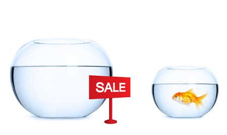 Goldfish is preparing to jump into a new aquarium. Concept of real estate. photo