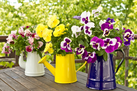 Three enamel jugs with pansy bouquets in different colors, colours Archivio Fotografico