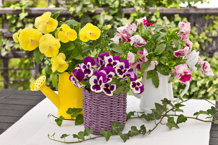 Pansy bouquets in three different colours, decorated with ivy