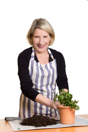 Happy senior woman planting parsley in a clay pot, isolated on white, copyspace photo