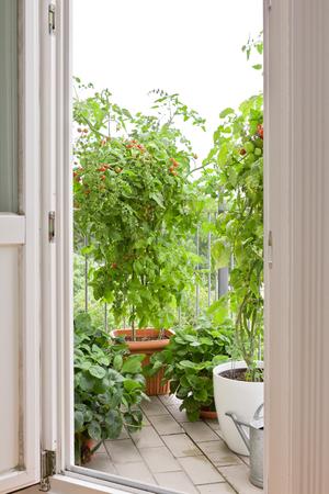 Bekijk via een open balkondeur op tomaten en aardbeien planten in potten, kopiëren ruimte
