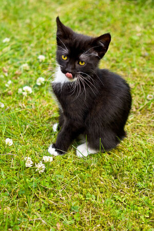 Cute kitten sitting alone on grass and licking its mouth, copy space photo