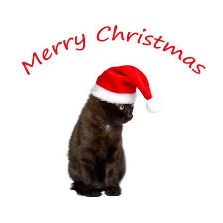 felis silvestris catus: Black kitten with red Father Christmas hat, square, isolated on white background, text merry christmas