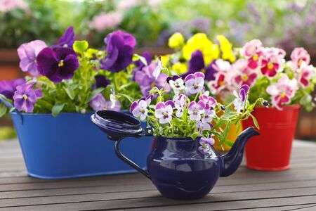 Purple, red and yellow pansy flowers in colorful pots on a balcony table, copy space, background 免版税图像