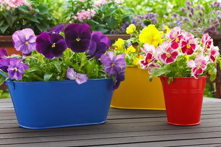Paars, rood en geel viooltje bloemen in 3 bijbehorende potten op een balkon tafel, copyspace, achtergrond