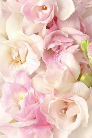 dreamlike: Freesia flowers in pastel pink and white in bright but soft light, very romantic, nostalgic and dreamlike, background Stock Photo